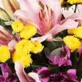 Sundrops: Irises and chrysanthemums