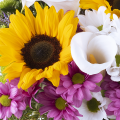 Equilibrium: Chrysanthemums and sunflowers