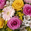 Vibrancy: Yellow and Pink Roses