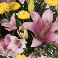 Sundrops: lilies and chrysanthemums