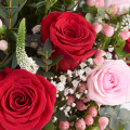 Fairy Tale: Red and Pink Roses
