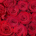 Queen of Love: Caja 40 Rosas Rojas