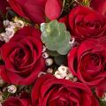Amour Éternel : 25 Roses Rouges