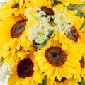 Gold-tinted Dawn: Sunflowers and Ammi Visagna
