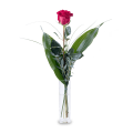 Flèche de Cupidon : Rose Rouge