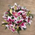 Orientalische Schönheit: Pinke Stargazer Lilien