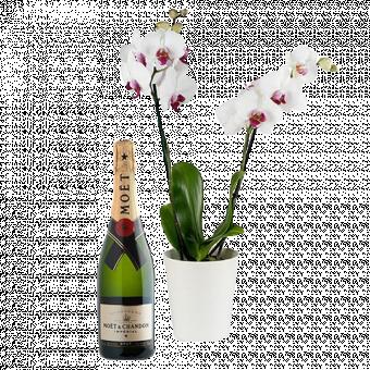 Burbujas con Estilo: Orquídea Blanca