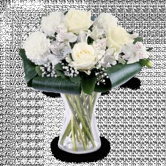 Paloma Blanca: Claveles y Rosas