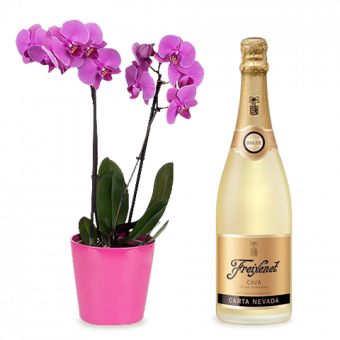 Orchidee mit Champagner