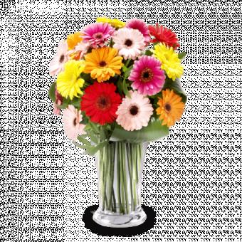 Arcoíris: Gerberas Multicolor