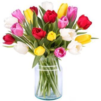Primavera: 20 Tulipanes Multicolor
