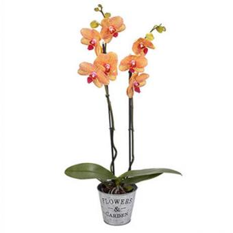 Изысканность: тигровая орхидея