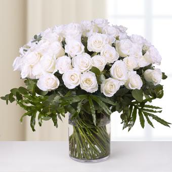 Ternura sin límite: 50 rosas blancas