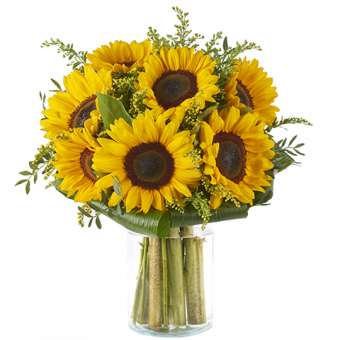 Ciepłe Słoneczko: Słoneczniki