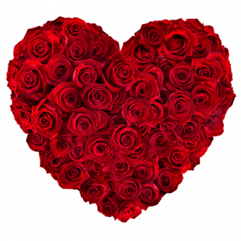 Cuore di rose: 50 rose rosse