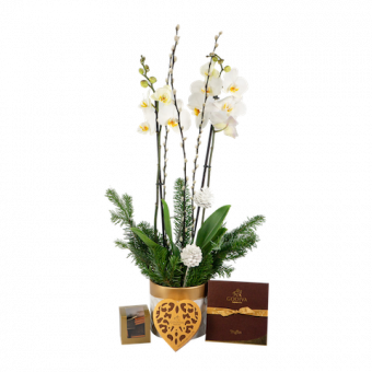 Christmas Orchid Set