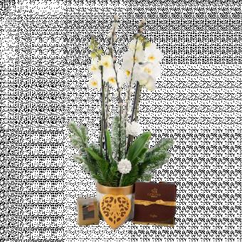 Coffret Orchidée de Noël