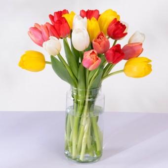 Iris: 20 Kolorowych Tulipanów