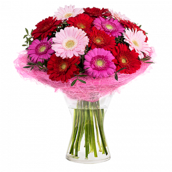 Farbenfroher Cocktail: Rosa und rote Gerberas
