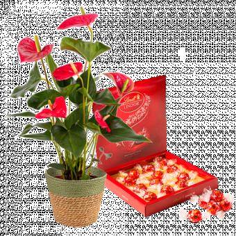 À Coeur Joie : Anthurium et Chocolats