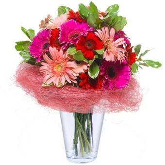 Floral Wonderland: Gerberas