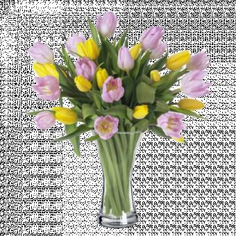 Festival: Tulipanes rosas y amarillos