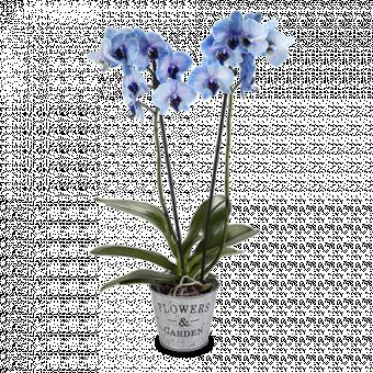 Blaue Orchidee: Tiefer Ozean
