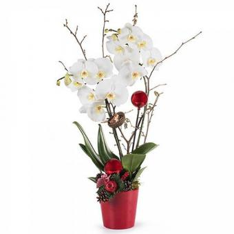 White Snow: Orchid with Decoration