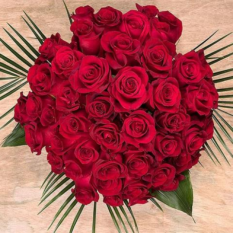 50 Shades of Red: 50 Red Roses