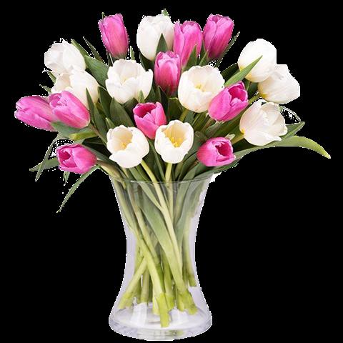 Sensations Printanières : Tulipes Roses et Blanches