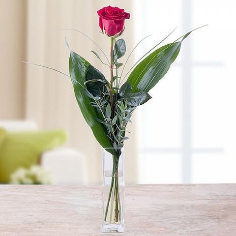 Dardo di Cupido: Rosa Rossa