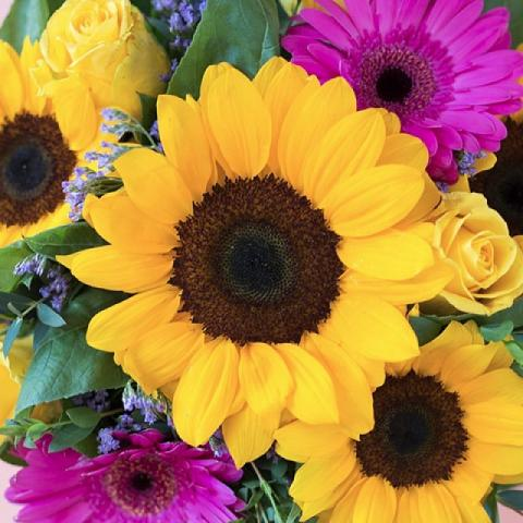 Ray of Light: Sunflowers and Gerberas