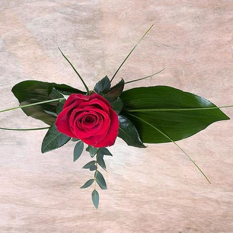 Cupid's Arrow: Red Rose