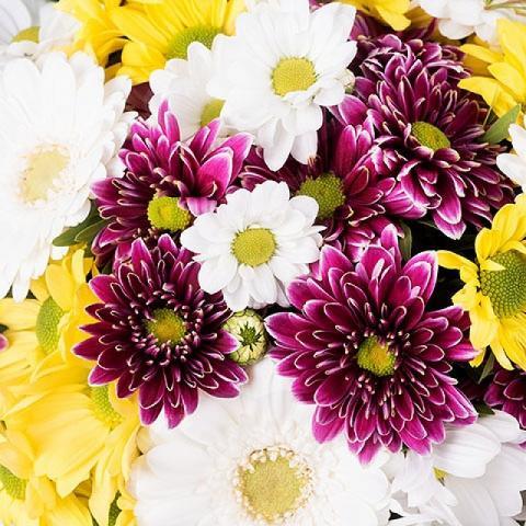 Wahnsinnige Gänseblümchen: Gemischte Blumen