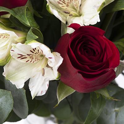 Blask księżyca: róże ialstremerie