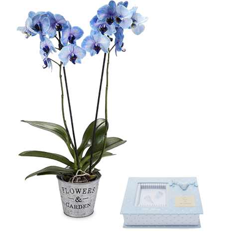 Blue orchid and album