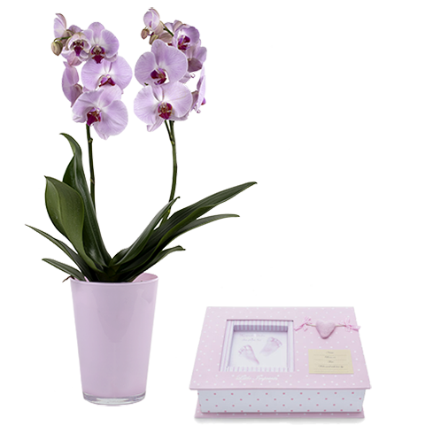 Pink orchid and album