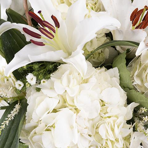Экстремальная элегантность: 25 белых цветов