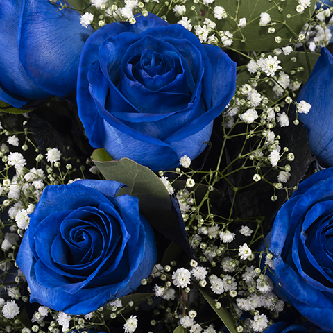 Gazing into infinity: 17 blue roses