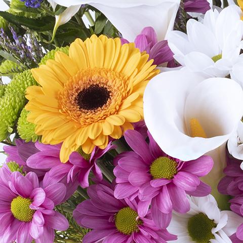 Luciérnagas: Crisantemos y Calas
