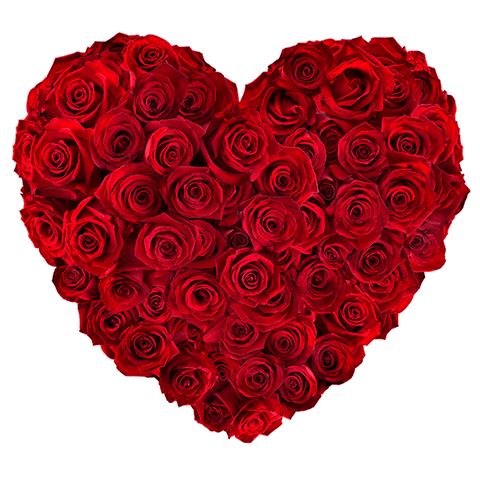 Heart of roses: 50 red roses