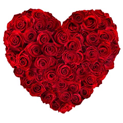 Serce z Róż: 50 czerwonych Róż