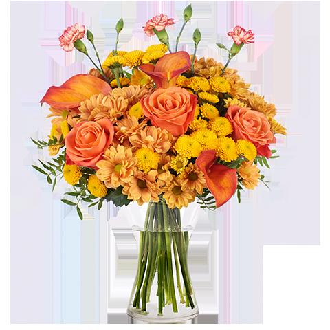Złota Jesień: Róże i Kalie