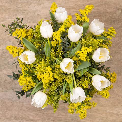 Solidarność: Białe Tulipany i Nawłoć