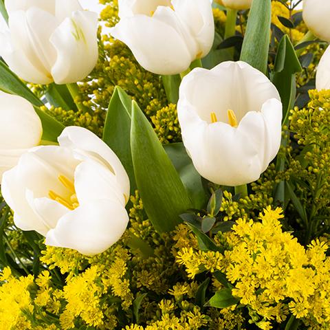 Solidarité : Tulipes et Solidago