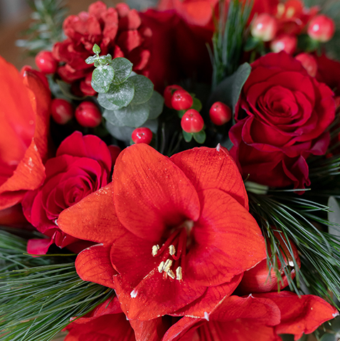 Christmas Warmth: Red Amaryllis and Roses