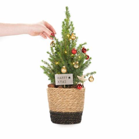 Ein kleiner Wunsch: Mini-Weihnachtsbaum
