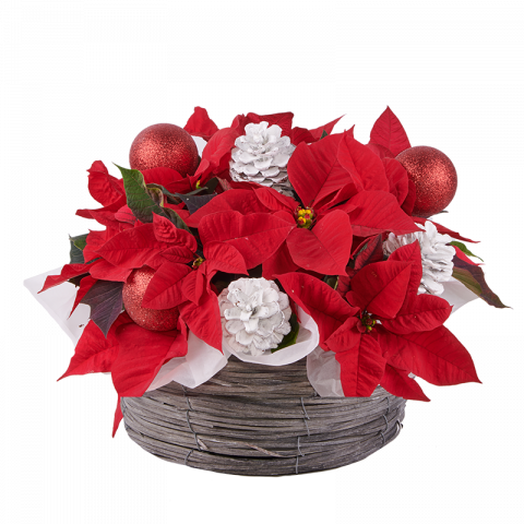 Sparkling Christmas: Poinsettia Basket