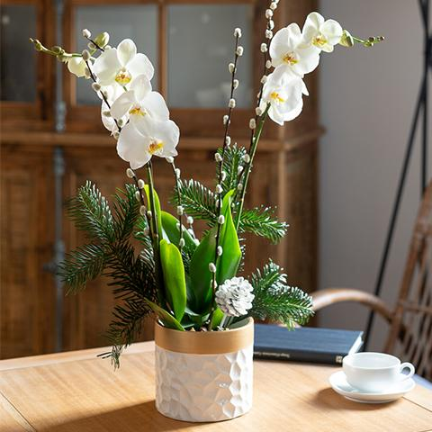 Silent Night: White Orchid