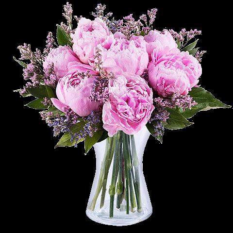 Barocke Schönheit: Rosa Pfingstrosen
